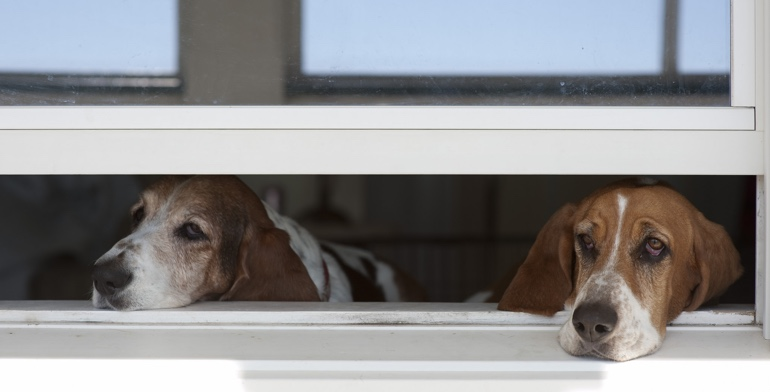 Dogs look out open window without window treatment in Destin.